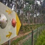flecha amarialla camino de santiago